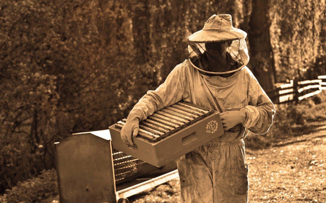 Devenir apiculteur : les formations à suivre